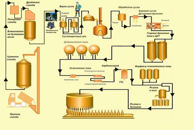 Технология производства пива: обзор процесса изготовления