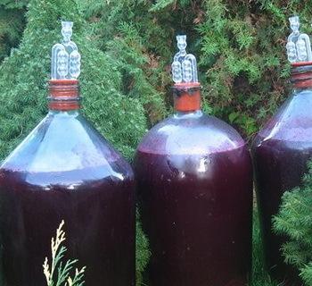 Самогон из винограда: простые рецепты браги из винограда и его сока