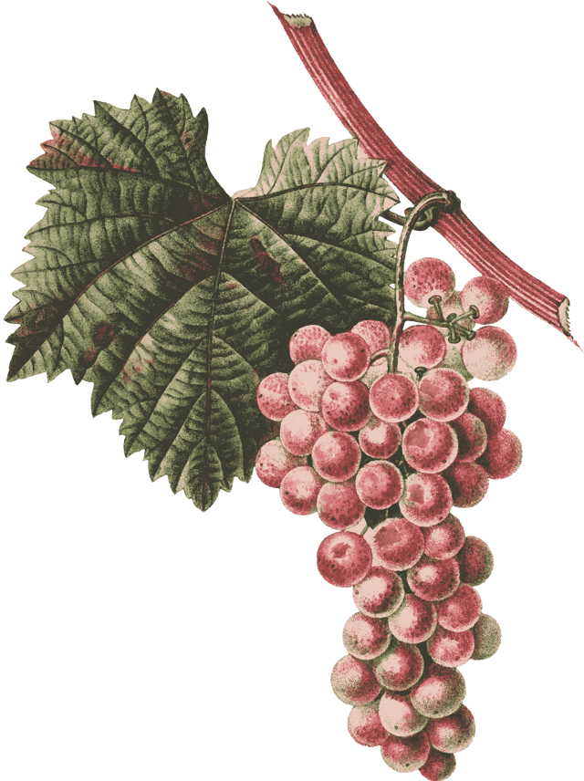 Горячее вино как называется напиток от кашля со специями