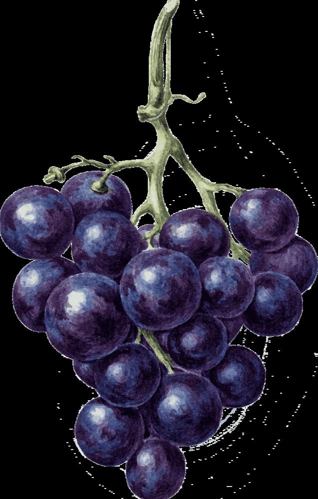 Вино из березового сока в домашних условиях: секреты рецепта