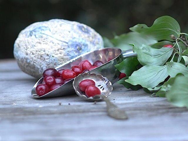 Кизил на коньяке, настойка и наливка кизиловая: рецепты