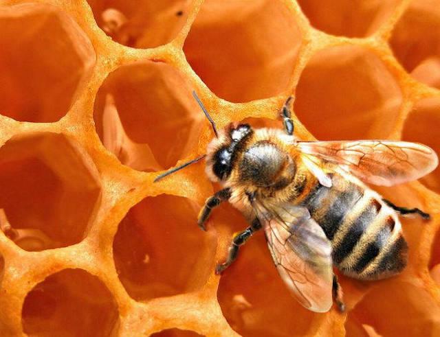 Сколько градусов в медовухе и как ее правильно приготовить