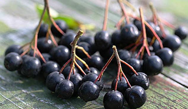 Ликёр из черноплодной рябины и из красной рябины: рецепты