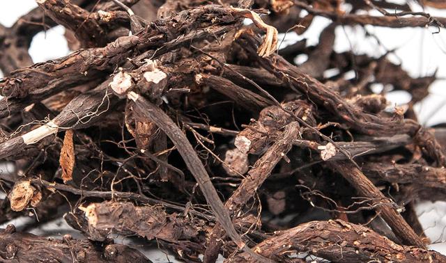 Настойка из корня белой лапчатки, готовим ее в домашних условиях