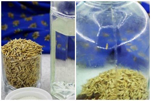 Квас из овса: польза и рецепты приготовления в домашних условиях