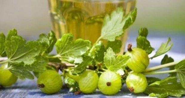 Домашняя наливка ягодка из крыжовника: рецепт приготовления