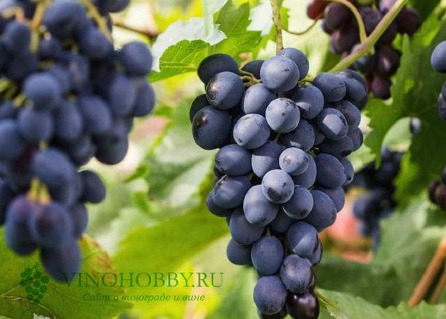 Алазанская долина вино Грузинское белое и красное