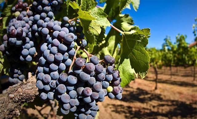 Оборудование для виноделия: как правильно приготовить вино