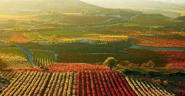 Вино Риоха Испания: обзор, характеристики, производство