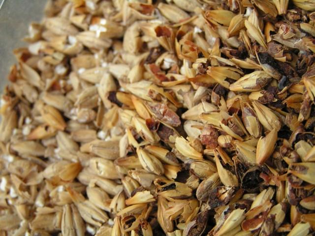 Самогон из солода и ячменя с проращиванием зерна: лучшие рецепты