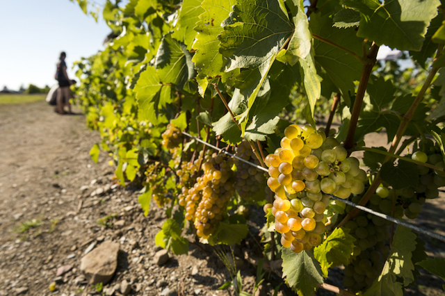 Павел Швец винодел: сомелье решил заняться виноделием в Крыму