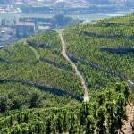cotes du rhone Кот Дю Рон: обзор областей виноделия и вина