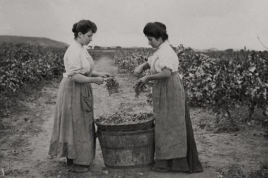 Кава игристое вино из Испании: обзор, характеристики, особенности