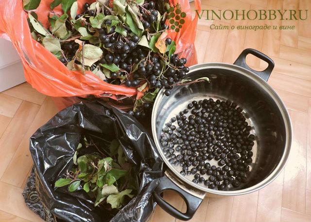 Настойка из черноплодной рябины в домашних условиях