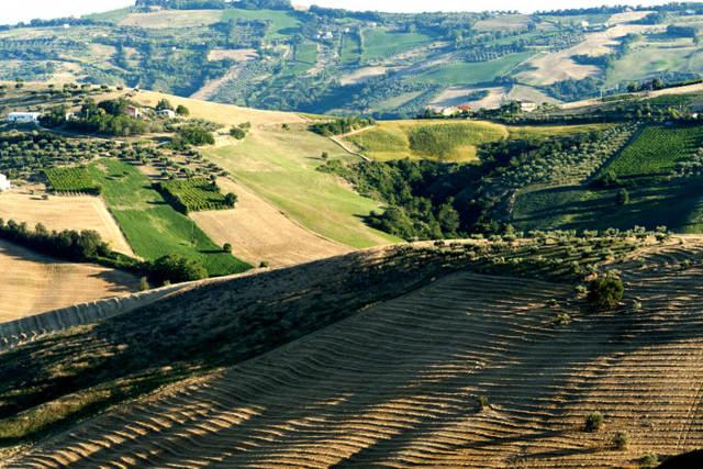montepulciano d abruzzo вино Монтепульчано дАбруццо разновидности