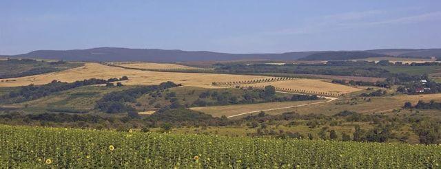 Винодельня Саук-Дере: вина, отзывы, экскурсии, дегустации