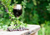 Как производить и продавать домашнее вино правильно
