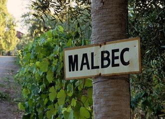 Вина из Мальбека: обзор, дегустационные характеристики