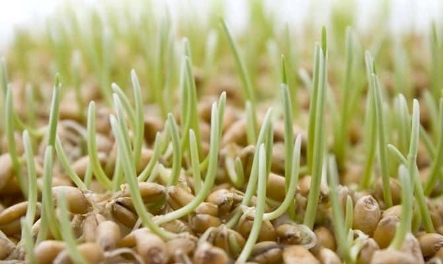 Самогон из риса можно приготовить по простому пошаговому рецепту
