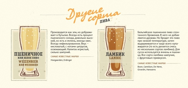 Сорта пива и их различия: описание и характеристики марок пенного