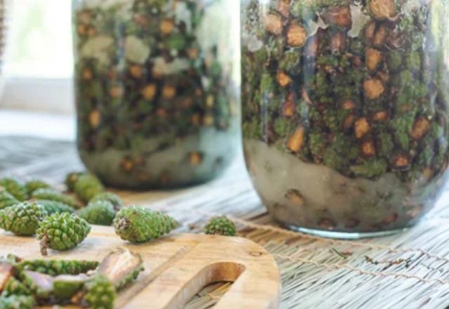 Настойка из шишек сосны на водке: рецепты и способы применения