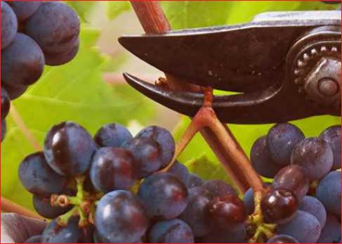 primitivo di manduria Итальянское вино: описание, отзывы