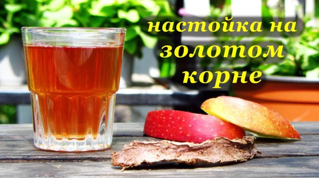 Золотой корень настойка на водке, спирте, самогоне: рецепты
